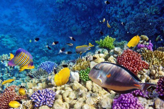 Ныряем в Красном Море